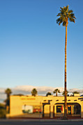 Towering Tree Prints - Tall Palm Tree Print by Eddy Joaquim