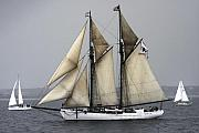 Schooners Art - Tall Ship by Dapixara Art