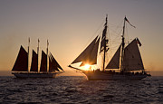 Tall Ships Posters - Tall ships at sunset Poster by Cliff Wassmann