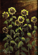 Vic Mastis Originals - Tall Sunflowers with Gold Leaf by Vic Mastis by Vic  Mastis