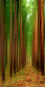 Leaf Digital Art Digital Art Prints - Tall Trees Print by Svetlana Sewell