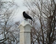 Graveyard Digital Art - Talon Of crow by Gothicolors And Crows