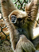 Monkey Photos - Tammy by Trish Tritz