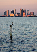 Tampa Skyline Photos - Tampa Skyline and Pelican by Carol Groenen