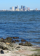 Tampa Bay Framed Prints - Tampa Skyline from Ballast Point Framed Print by Carol Groenen