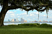 Tampa Skyline Posters - Tampa Skyline through Old Oak Poster by Carol Groenen