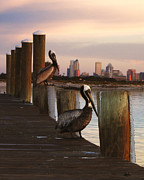 Dorothy Riley - Tampa Waterfront...