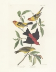 John James Audubon (1758-1851) Framed Prints - Tanagers Framed Print by John James Audubon