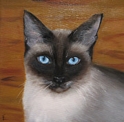 Siamese Cat Print Framed Prints - Tang Framed Print by Colleen Lambert