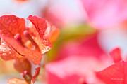 Michelle Wiarda - Tangerine Dream