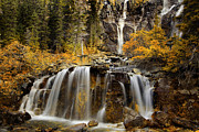 Alberta Water Falls Posters - Tangle Falls Poster by Keith Kapple