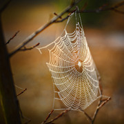 Brenda Bryant Photo Prints - Tangled Web Print by Brenda Bryant