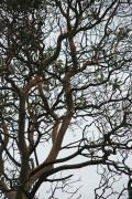 Tangled Web Tree Print by Carol  Eliassen