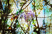 Fragrance Mixed Media Prints - Tangled Wisteria Print by Andee Photography