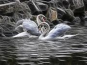Animals Love Prints - Tango Of The Swans Print by Joachim G Pinkawa