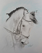 Friesian Prints - Tanion Print by Gail Finger