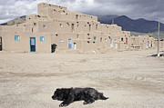 Sleeping Black Dog Posters - Taos Pueblo Poster by Luc Novovitch
