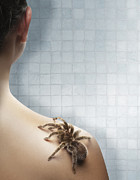 Domestic Bathroom Prints - Tarantula Crawling Up A Womans Back In The Shower Print by Michael Blann