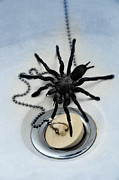Big Spider Framed Prints - Tarantula in Bathtub Framed Print by Jill Battaglia
