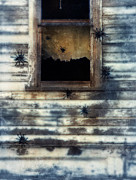 Big Spider Framed Prints - Tarantula Spiders Crawling on an old House Framed Print by Jill Battaglia