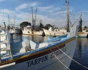 Forida Prints - Tarpon Spring harbor view Print by Tom Tripp