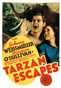 Sullivan Posters - Tarzan Escapes, Johnny Weissmuller Poster by Everett