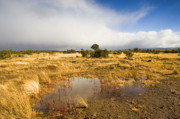 Tasmanian Storm  Print by Mike  Dawson