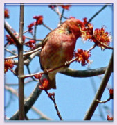 Image Of Bird Prints - Taste Of Spring Print by Debra     Vatalaro