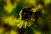 Kasia Dixon - Tasting Honey