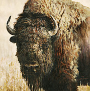 Dakota Painting Metal Prints - Tatanka Metal Print by Leisa Temple