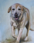 Yellow Lab Paintings - Tate by Mary Leslie
