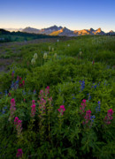 Lupine Framed Prints - Tatoosh Dawn Framed Print by Mike  Dawson