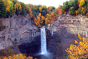 Yellow Trees Framed Prints - Taughannock waterfalls in autumn Framed Print by Mingqi Ge