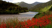 Blooming Digital Art - Taupo New Zealand River and Flowers by Mark Duffy