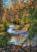 Woodland Scene Prints - Tawawa Creek Print by Pamela Baker