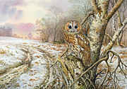 Perch Posters - Tawny Owl Poster by Carl Donner