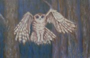 Owl Pastels - Tawny Owl in Flight by Joann Renner