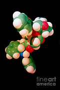 Derivative Prints - Taxol Molecule Print by Science Source