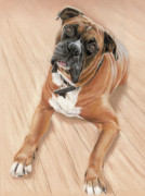 Boxer Pastels Framed Prints - Taz my best friend Framed Print by Vanda Luddy