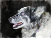 Collie Digital Art Metal Prints - TBone Rex Metal Print by   DonaRose
