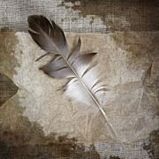 Carol Posters - Tea Feather Poster by Carol Leigh