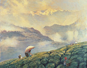 Hills Paintings - Tea Picking - Darjeeling - India by Tim Scott Bolton
