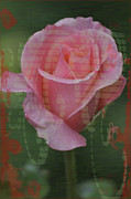 Tea Rose Posters - Tea Rose - Asia Series Poster by Mary Machare