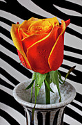 Seasonal Bloom Posters - Tea rose in striped vase Poster by Garry Gay