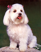 Dog Pet Portraits Mixed Media Posters - Tea Rose Maltese Poster by Snake Jagger