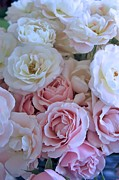 Dressing Room Photos - Tea Time Roses by Carol Groenen