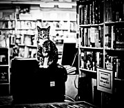 Bookstore Framed Prints - Teacup the Bookstore Cat Framed Print by Pam Kennedy