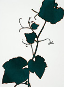 Grape Leaf Drawings - Teal Grape Leaves II by Alexandra Sheldon