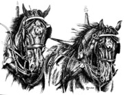 Percheron Drawings Posters - Team Effort Poster by Marni Koelln