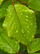 Artography Photos - Tears of Green by Stephen Lawrence Mitchell